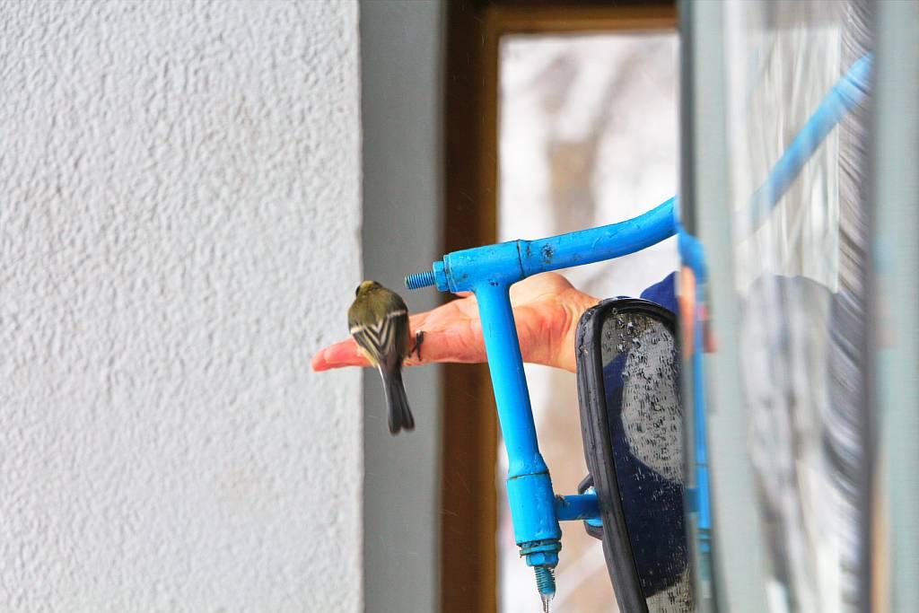 Fahrerin der Seilbahn füttert Vögel